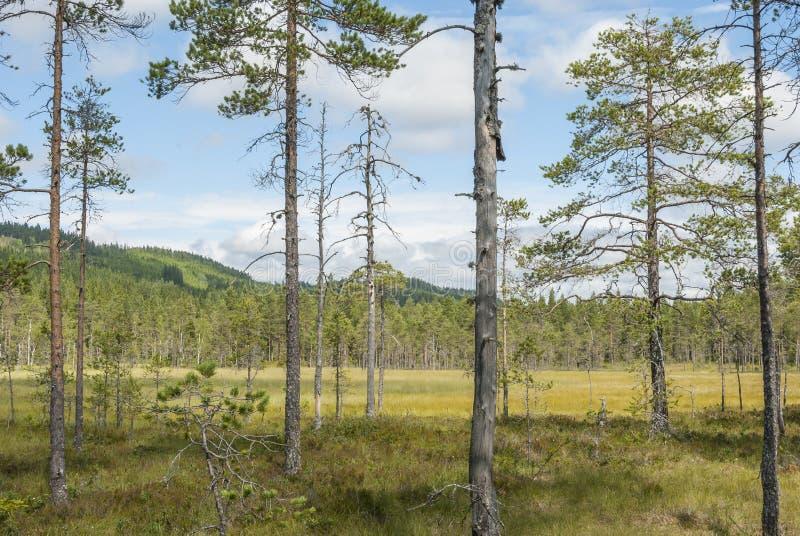 Download Sumpflandschaft In Schweden Stockbild - Bild von gras, schweden: 96927877