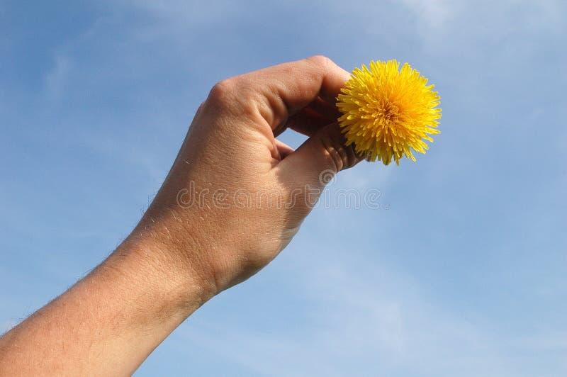 Download Sun à disposition image stock. Image du doigts, pré, ciel - 729873