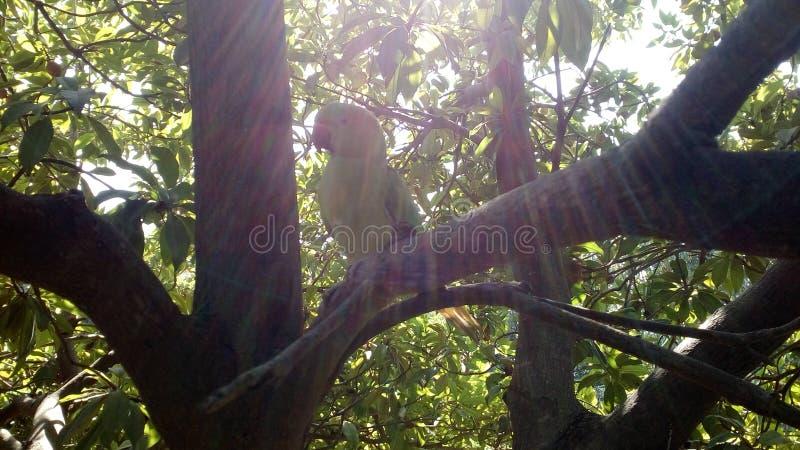 Sun, árvore, surpresa da combinação do papagaio foto de stock