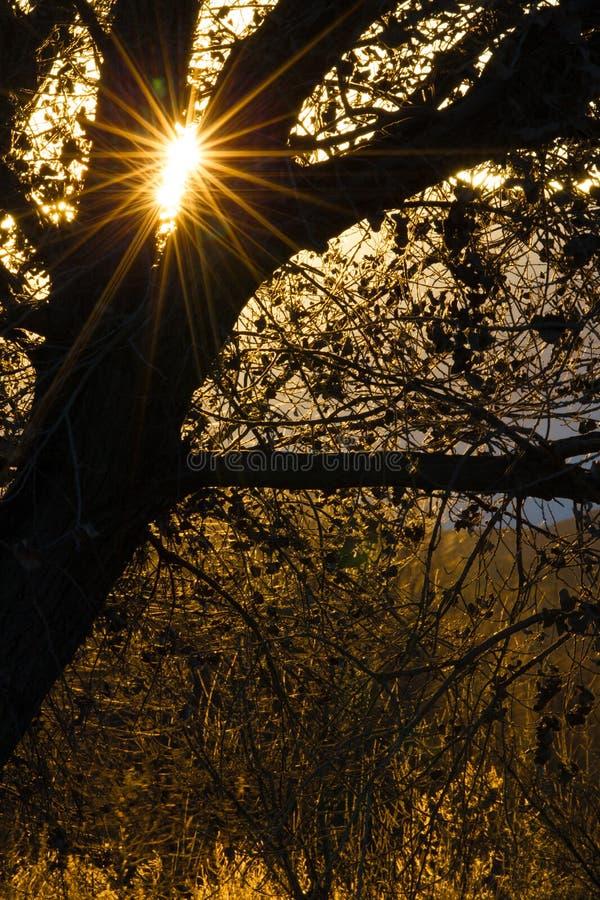 Sun a éclaté des reflets par les arbres à Bosque del Apache au Nouveau Mexique images libres de droits