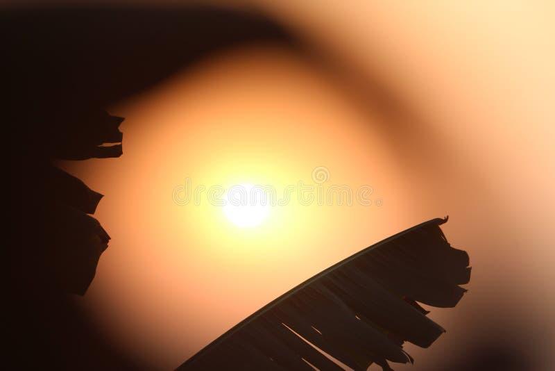 Download Sun foto de stock. Imagem de bonito, agradável, banana - 107527420