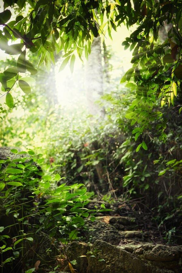 Download Sun arkivfoto. Bild av naturligt, trappa, bana, stråle - 19789486