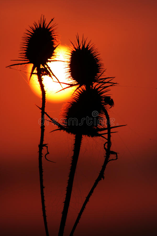 Download Sun stock image. Image of sunrise, outdoor, details, sunset - 20138017