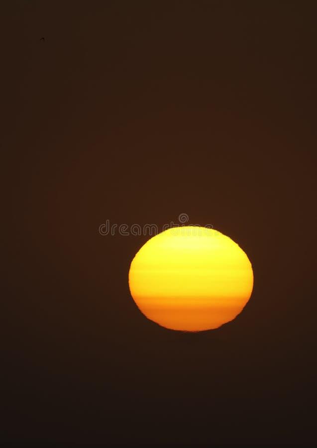 Download Sun stock photo. Image of corona, evening, bird, sunset - 20806108