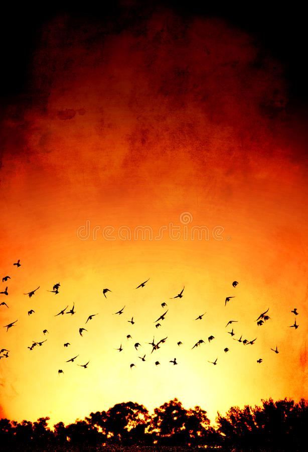 Download Into the Sun stock image. Image of grunge, tops, sunrise - 26288515