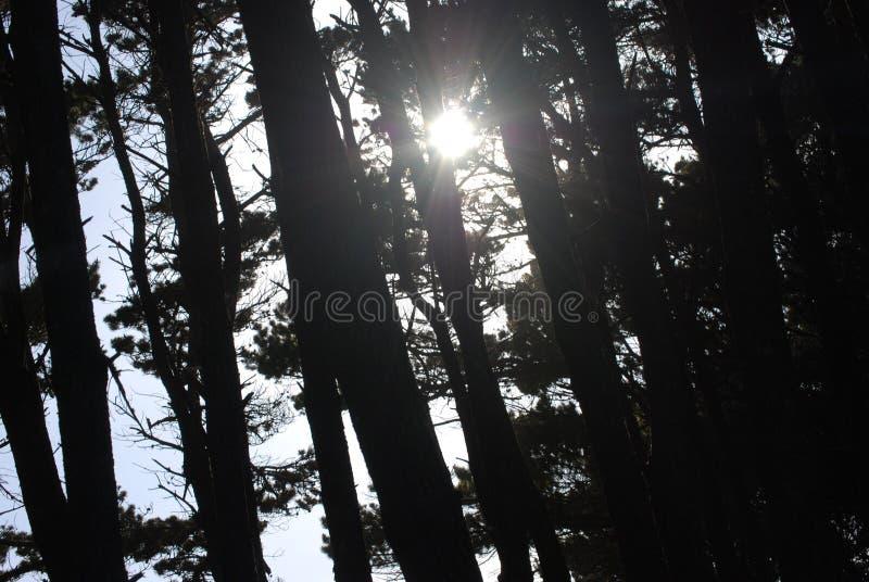 Sun foto de stock royalty free