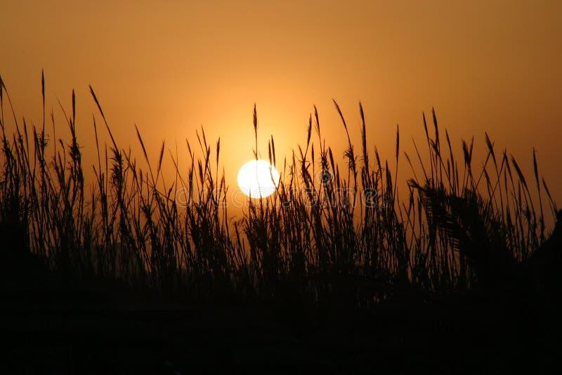 Sun africano fotos de archivo