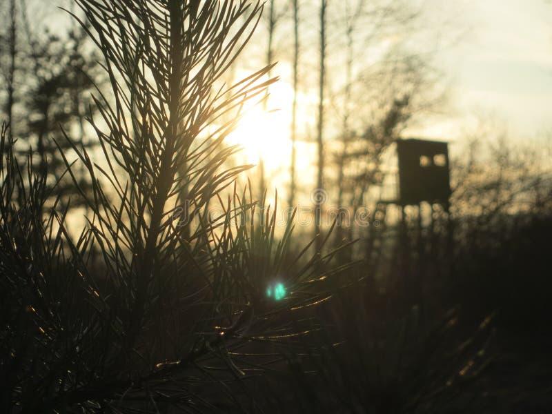 Sun, alberi e un supporto dei cervi fotografia stock