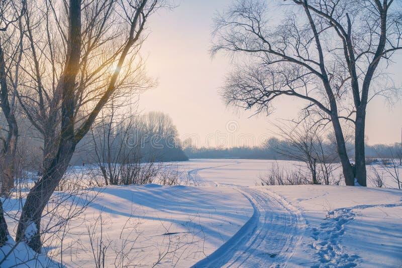 Sun antes do por do sol nos ramos das árvores no ar gelado foto de stock royalty free