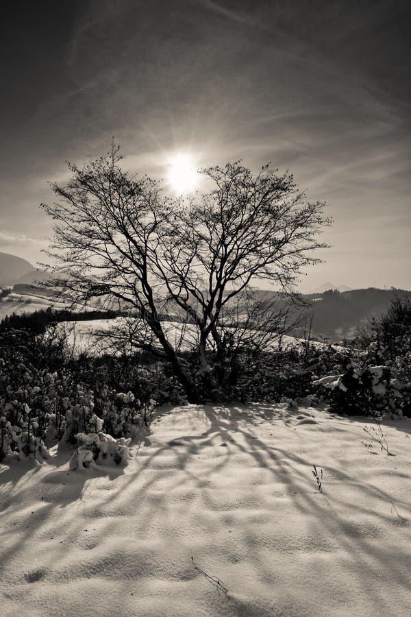 Sun atrás da árvore imagens de stock