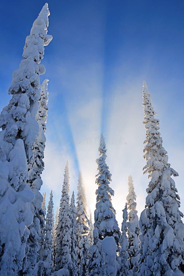 Sun atrás das árvores imagens de stock royalty free