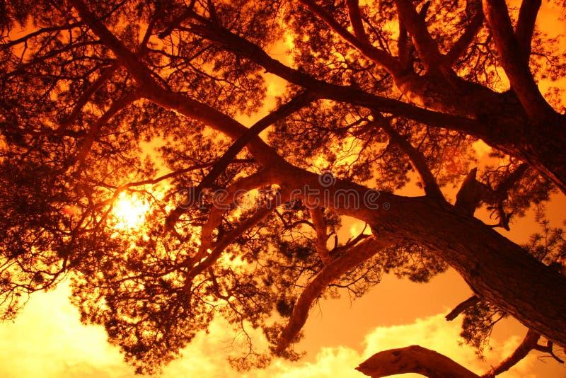 Sun atrás de uma árvore grande fotos de stock