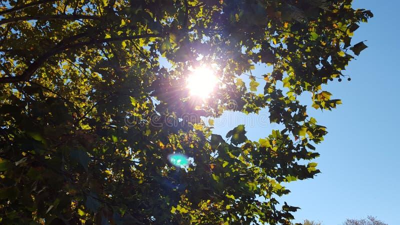 Sun através da árvore imagens de stock royalty free