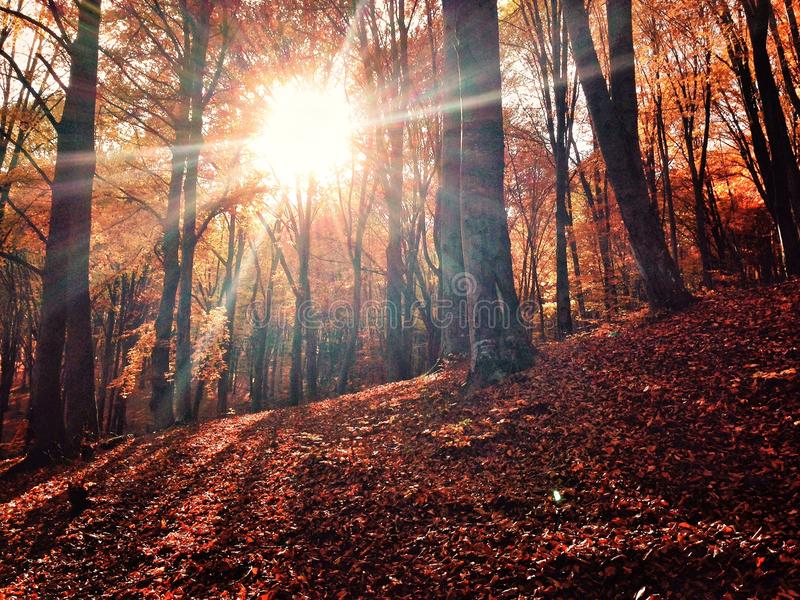Sun através da floresta do outono fotografia de stock