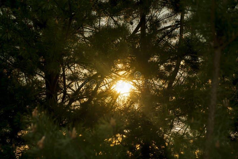 Sun através das madeiras imagens de stock