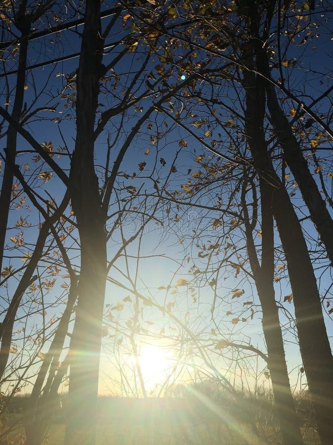 Sun attraverso gli alberi fotografia stock libera da diritti