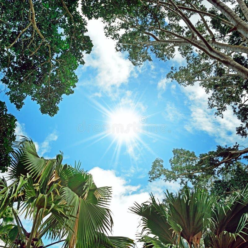 Sun au ciel et à l'arrière-plan des branches d'arbre photo libre de droits