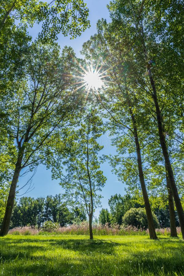 Sun au milieu par les arbres image libre de droits