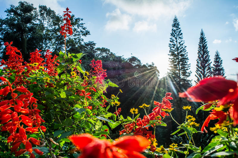 Sun auf Blume stockbild