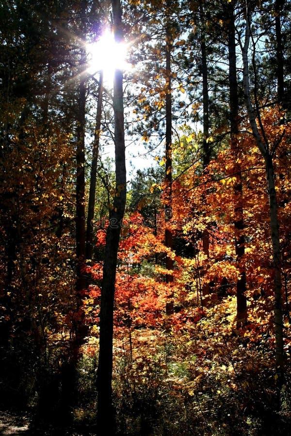 Sun beam through autumn trees royalty free stock photos
