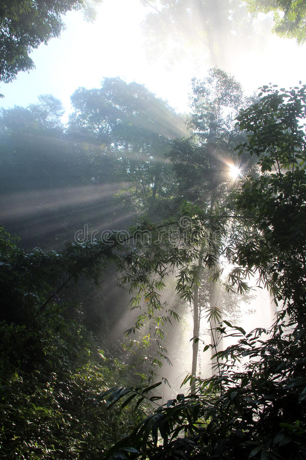Download Sun beam woods stock photo. Image of desperation, feeling - 32868762