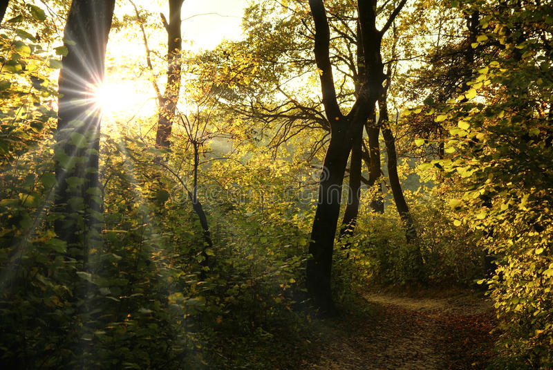 Download Sun beams stock photo. Image of nature, forest, misty - 10752510
