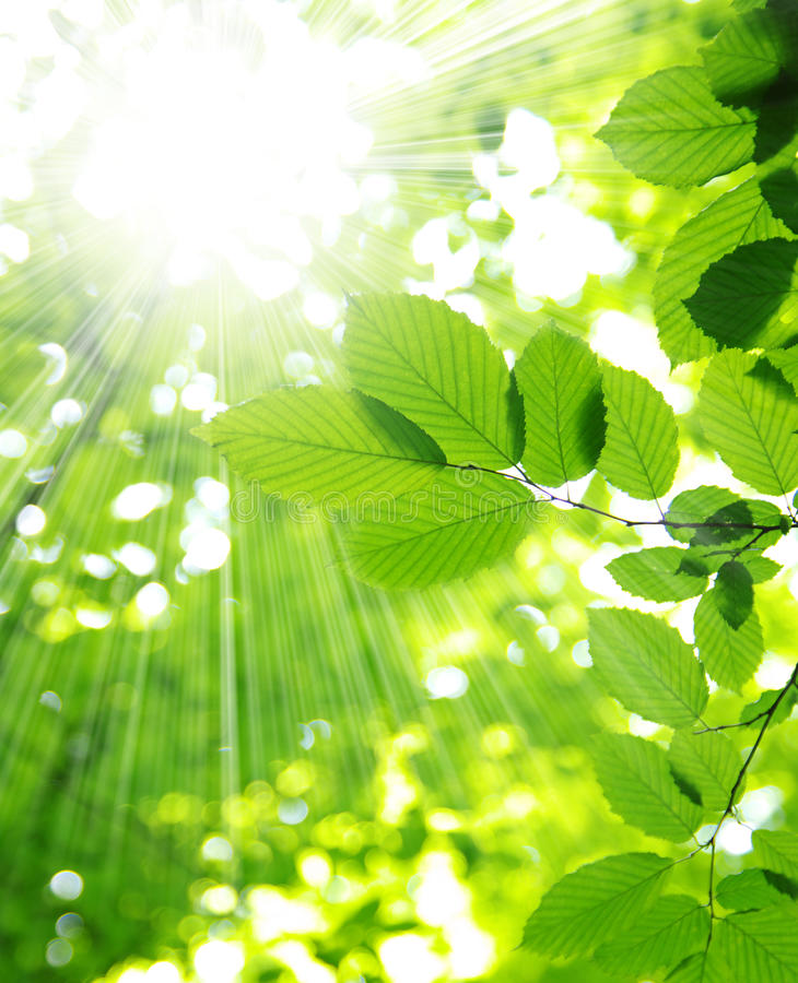 Download Sun beams stock photo. Image of leaves, beauty, plants - 15184500