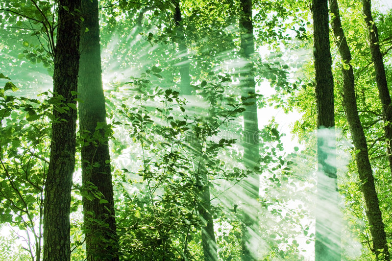 Sun beams. In the forest shining through the smoke stock image