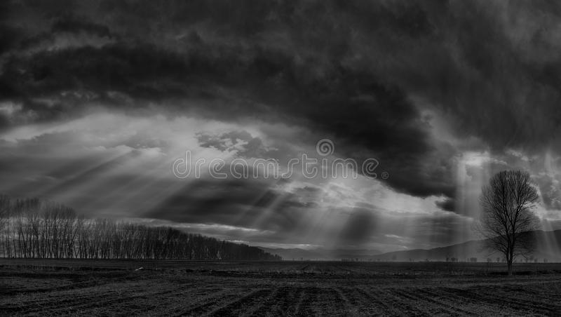 Sun beams. Dramatic skyline with a lonely tree on the foreground stock photography