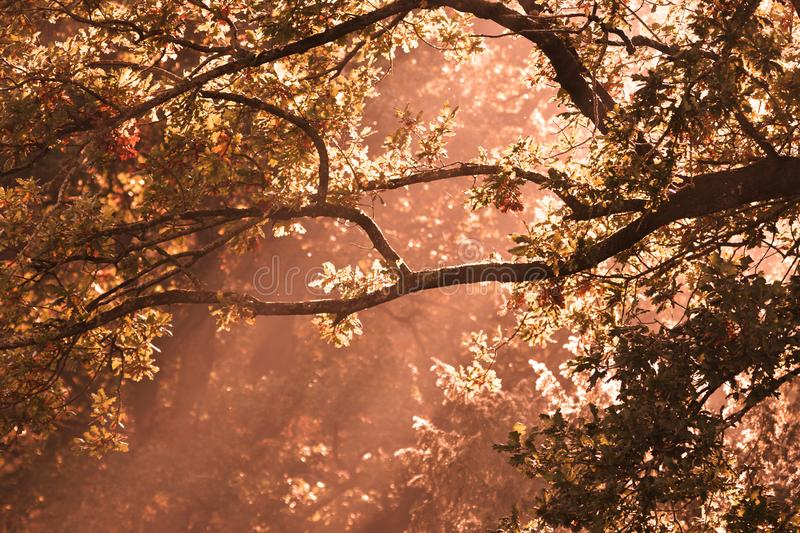 Sun beams through trees. Morning sun rays shine through forest trees just after sunrise