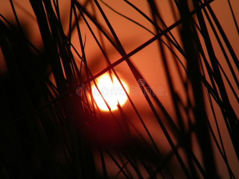 The sun is behind the bush. Red and orange in color stock photography