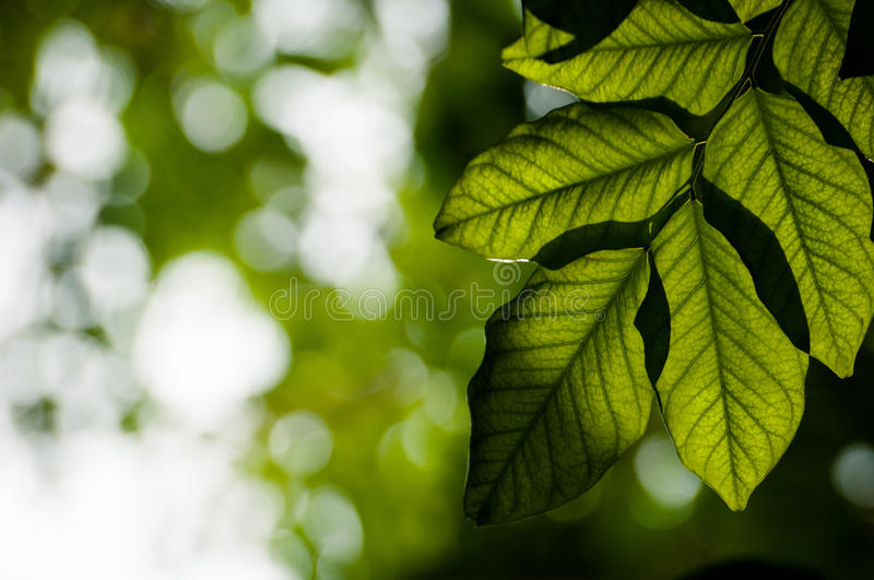Download Sun Behind The Leave With Bokeh Stock Image - Image: 33455745