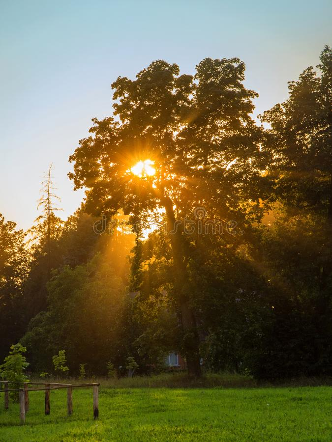 Sun behind a tree. Summer landscape. stock image
