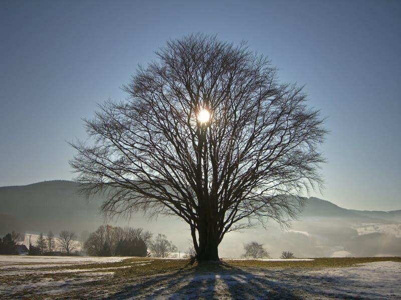 Sun behind tree in winter stock image