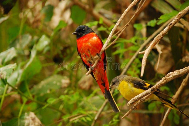 The sun bird stock image