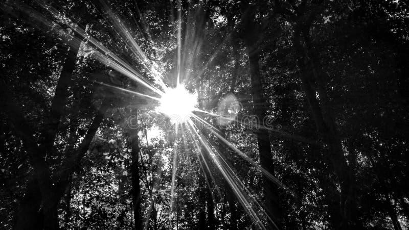 Sun In BlackWhite. Sun blackwhite forest art abstrack natural royalty free stock photos