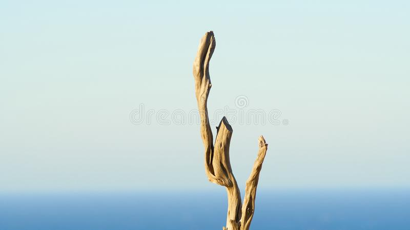 Sun Bleached Dry Wooden Branches stock photography