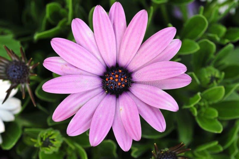 Sun blomma som är härlig royaltyfria foton