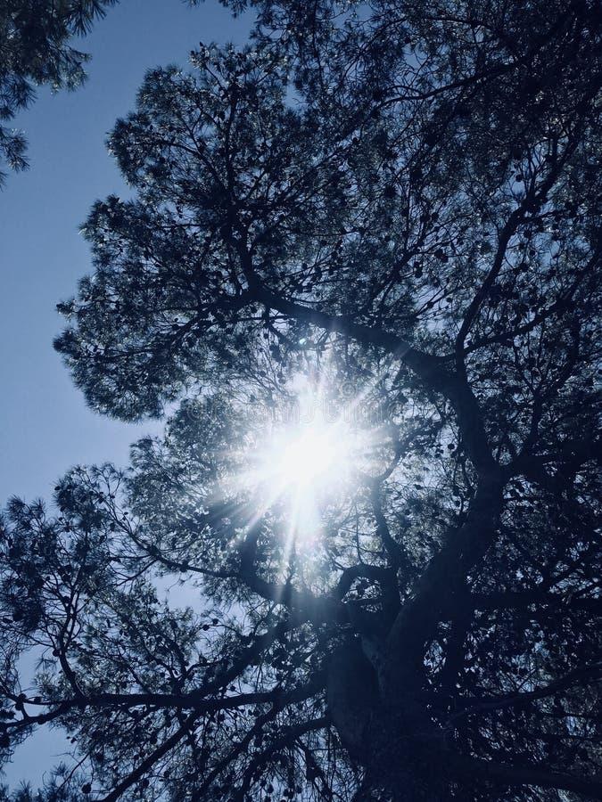 Sun through branches royalty free stock photo