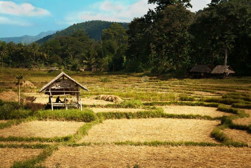 Sun brilha a cabana dourada do arroz imagens de stock royalty free