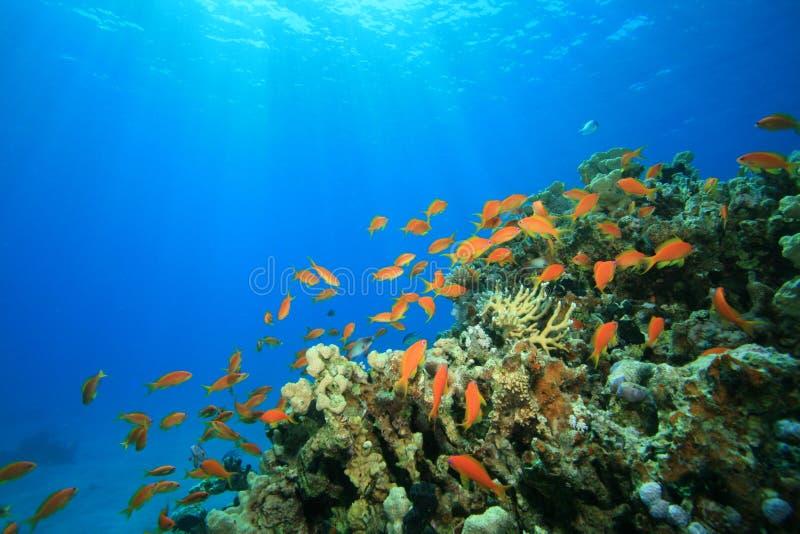 Sun brilla sobre el filón coralino tropical fotos de archivo libres de regalías