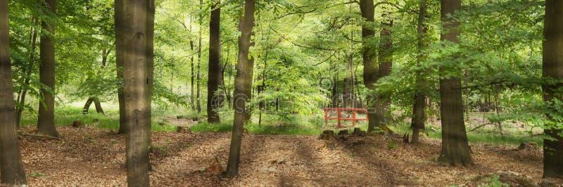 Sun brilla a través de los árboles de hojas caducas verdes en el bosque imagen de archivo