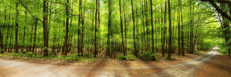 Sun brilla a través de los árboles de hojas caducas verdes en el bosque foto de archivo libre de regalías