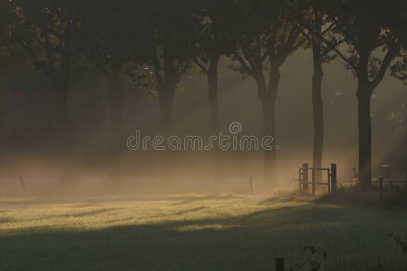 Sun brillant au-dessus d'un pré brumeux photo libre de droits