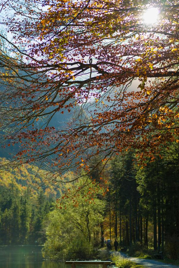 Sun brillant par l'automne forrest avec un lac photos libres de droits