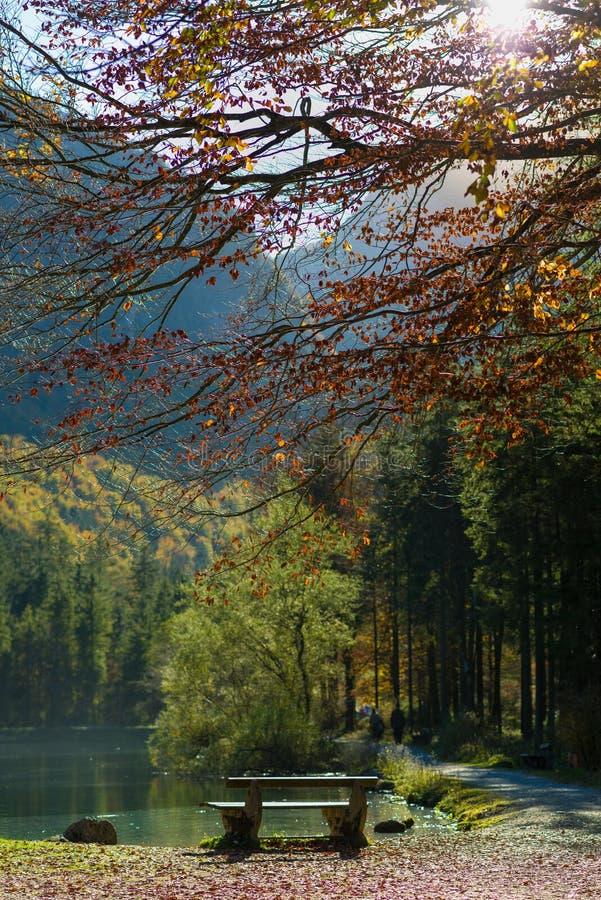 Sun brillant par l'automne forrest avec un lac photographie stock libre de droits