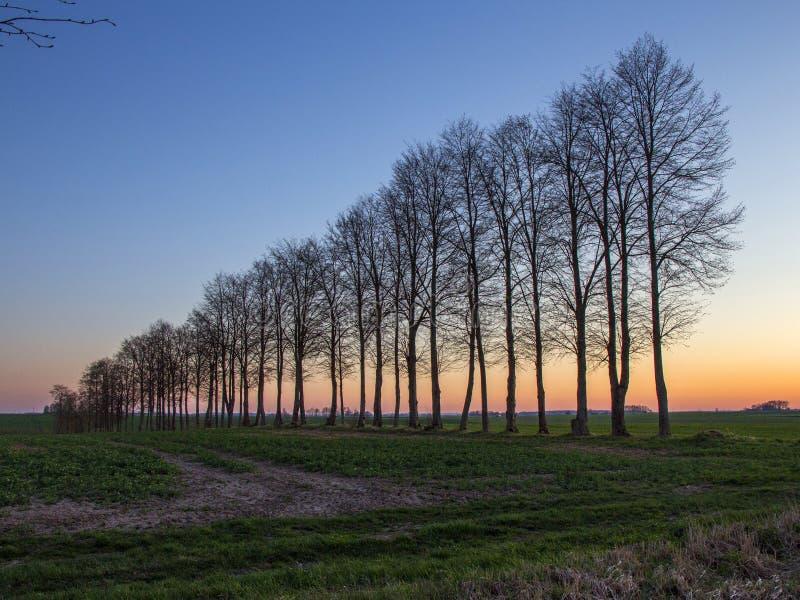 Sun brillant par les arbres près de la route rurale Paysage photos libres de droits