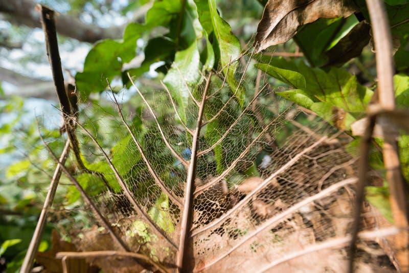 Sun brille par beau sèchent des feuilles dans la forêt tropicale du Vietnam photos stock