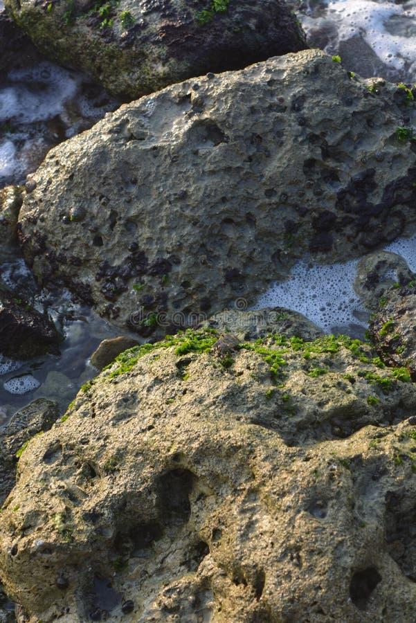 Sun-brille sur les restes de champignons sur des roches La Mer Rouge Jeddah image libre de droits