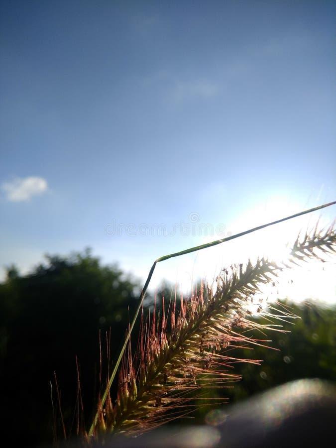 Sun Busch stockfoto